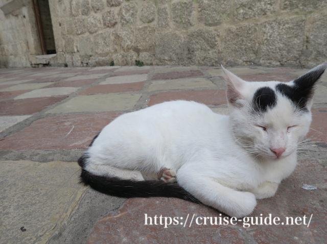 コトルの猫