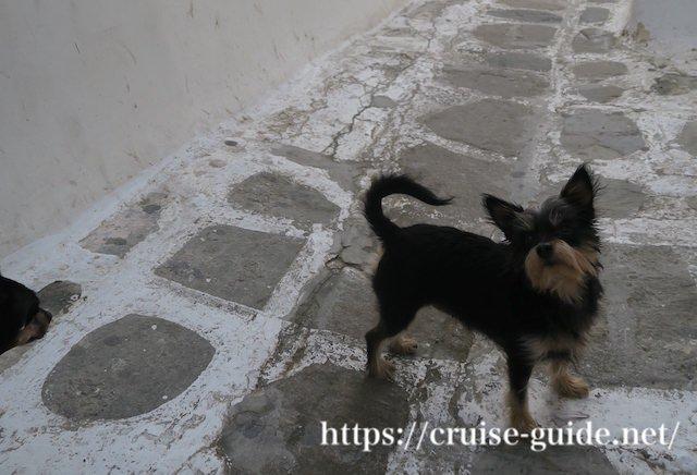 ギリシャの犬